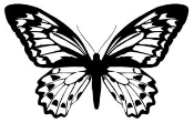 Butterfly 12 Decal Sticker