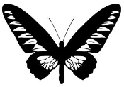 Butterfly 13 Decal Sticker