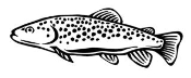 Brown Trout Decal Sticker