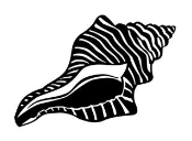 Conch Shell Decal Sticker
