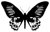 Butterfly v8 Decal Sticker