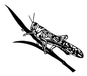 Grasshopper Decal Sticker
