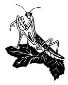 Praying Mantis Decal Sticker