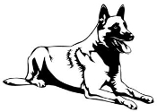 Belgian Malinois Decal Sticker