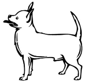 Chihuahua Decal Sticker