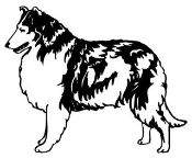 Collie Decal Sticker