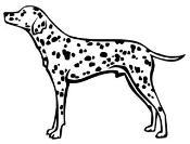 Dalmatian v1 Decal Sticker