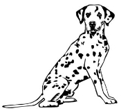 Dalmatian v2 Decal Sticker