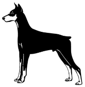 Doberman Decal Sticker