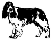 Springer Spaniel Decal Sticker