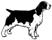 Springer Spaniel v3 Decal Sticker