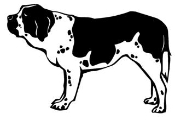 St Bernard Decal Sticker