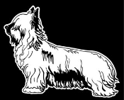 Yorkshire Terrier Decal Sticker