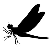 Dragonfly v3 Decal Sticker
