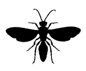 Wasp v4 Decal Sticker