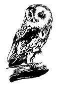 Owl v3 Decal Sticker