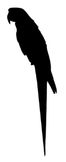 Parrot Silhouette Decal Sticker