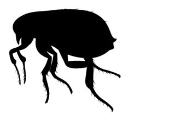 Mite Decal Sticker