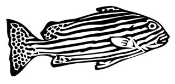 Zebrafish Decal Sticker