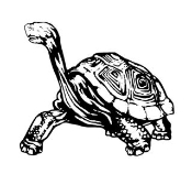 Tortoise Decal Sticker