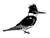 Woodpecker 2 Decal Sticker
