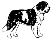 Saint Bernard v3 Decal Sticker