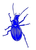 Beetle v7 Decal Sticker