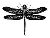 Dragonfly v4 Decal Sticker