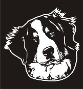 Bernese Mountain Dog Head v2 Decal Sticker