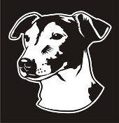 Jack Russell Head v3 Decal Sticker