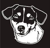 Jack Russell Head v4 Decal Sticker