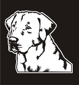 Labrador Head v3 Decal Sticker