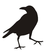Raven Bird Silhouette Decal Sticker