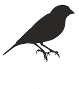 Canary Silhouette Decal Sticker