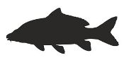 Carp Silhouette Decal Sticker