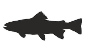 Trout Silhouette Decal Sticker