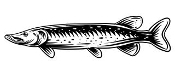 Pike Fish v1 Decal Sticker