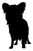 Papillion Silhouette Decal Sticker