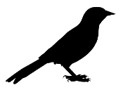 Oriole Silhouette Decal Sticker