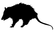 Opossum Silhouette Decal Sticker