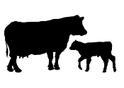 Cow and Calf Silhouette Decal Sticker