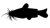 Catfish Silhouette v2 Decal Sticker