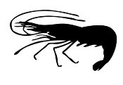 Shrimp Silhouette v2 Decal Sticker