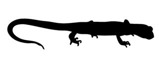 Lizard Silhouette v18 Decal Sticker